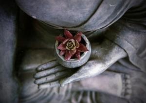 Yoga Meditation Buddha mit Pflanze